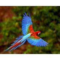 Птицы (4)